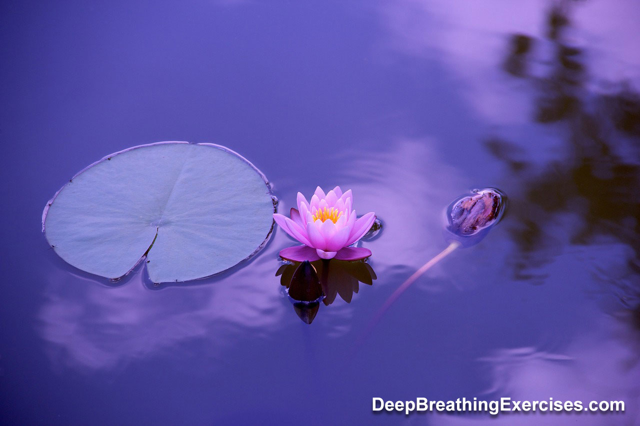 Lotus breathing